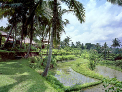 Amandari - Peaceful surroundings