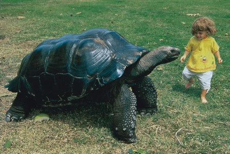 Tortoise Playing with kid